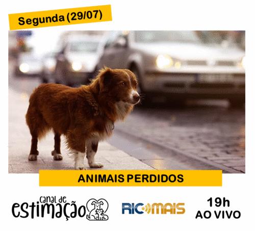 RIC Play apresenta - Programa de Estimação: animais perdidos