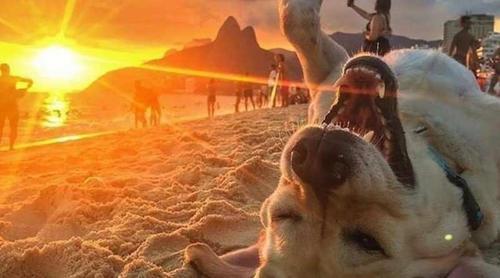 4 dicas para cuidar do cachorro no verão