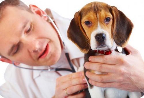 Saiba identificar se o seu pet sofre com a dor crônica