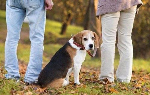 Guarda compartilhada de animais após separação será analisada na CCJ