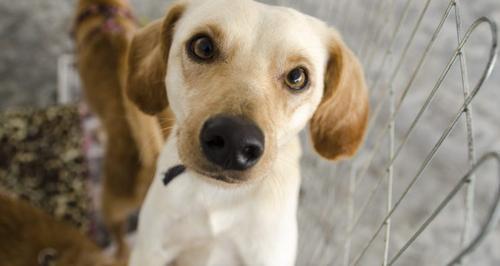 Crianças vão conhecer e dar carinho aos animais resgatados pela Prefeitura de Curitiba