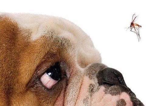 Semana Nacional de Controle e Combate à Leishmaniose: como evitar que os cães se tornem vetores da doença