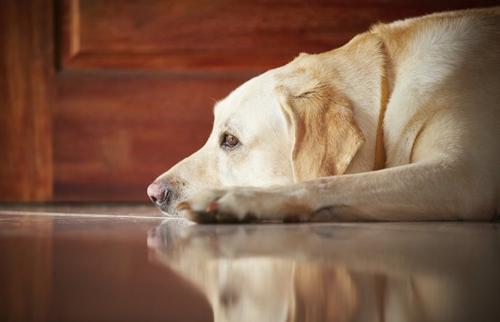 Saúde dos animais pode ser afetada se deixados sozinhos em casa durante as férias