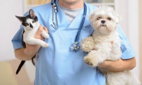 Saiba quais são os benefícios da castração para a saúde do seu animal
