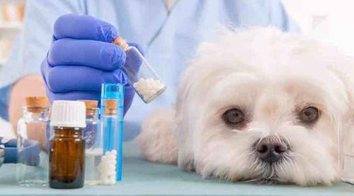 Homeopatia é especialidade em ascensão na veterinária