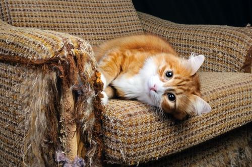 Seis dicas para seu gato não arranhar o sofá