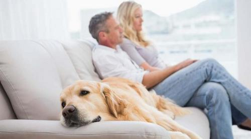 Cães podem ficar deprimidos quando donos usam muito o celular