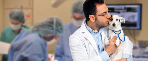 Panorama do ensino da Medicina Veterinária no Brasil foi tema de palestra no MedVep