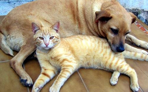 Cães e gatos terão atendimento veterinário gratuito na Regional Portão