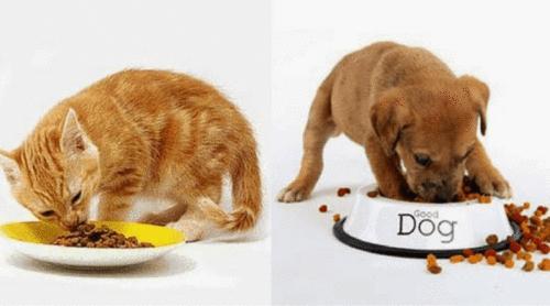 Você sabe quantas vezes deve alimentar seu pet?