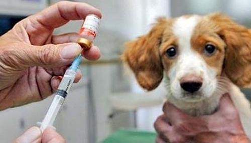 Manter os cães e gatos vacinados evita que a raiva apareça com mais frequência