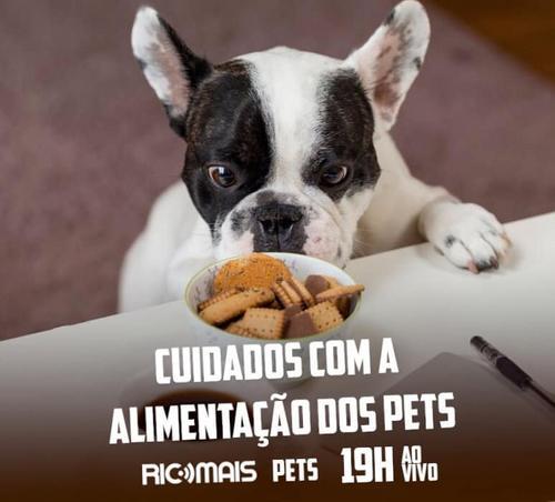 RIC Mais Pets: cuidados com a alimentação dos pets
