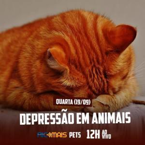 RIC Mais Pets: depressão em animais