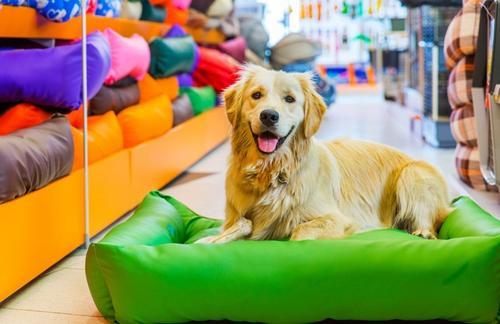 Mercado Pet: Brasil é o terceiro país que mais fatura no mundo