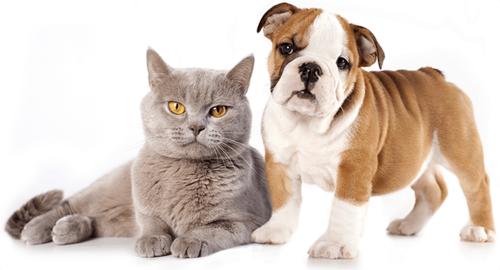 Por que cães amam e gatos odeiam água?