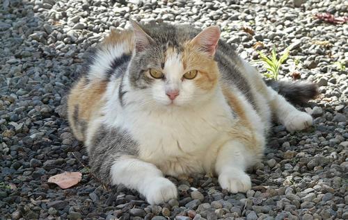 Obesidade em cães e gatos é tema de palestra no MedVep 2019