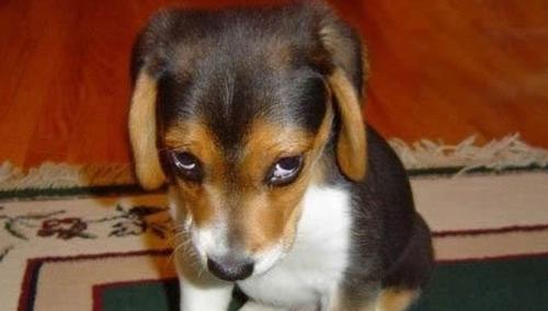 Os animais têm sentimentos ou emoções?