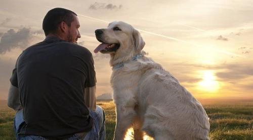 Estudos dizem que criar cães pode tornar você um líder melhor e mais feliz