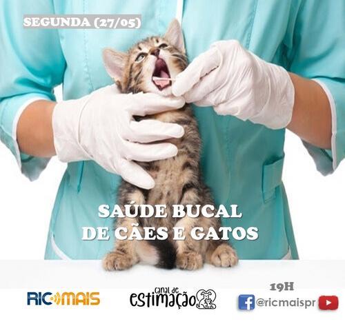 RIC Play apresenta - Programa de Estimação: saúde bucal de cães e gatos