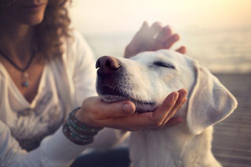 Curitiba: Dia de Pet verão realizará sessões de reiki gratuitamente em animais