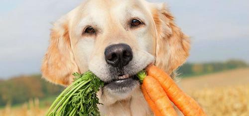 Dieta vegana faz bem para o seu animal?