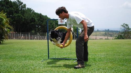 Obesidade canina: a prática do Agility pode ajudar
