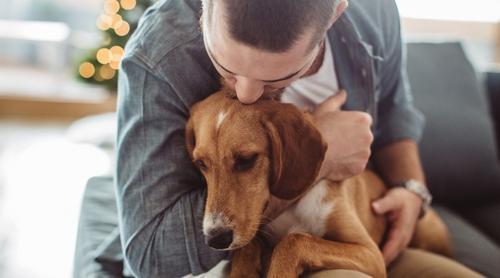 Conheça alguns casos julgados pelo STJ envolvendo animais