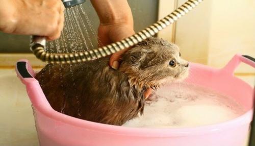 Gatos realmente precisam tomar banho?