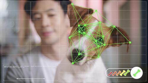 Petz lança e-commerce com reconhecimento facial para cachorros