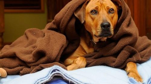 5 passos para prevenir as doenças mais comuns no inverno em cães e gatos