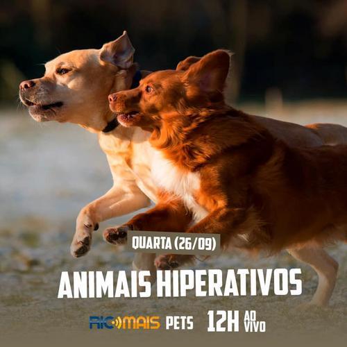 Animais Hiperativos foi o tema do RIC Mais Pets desta semana