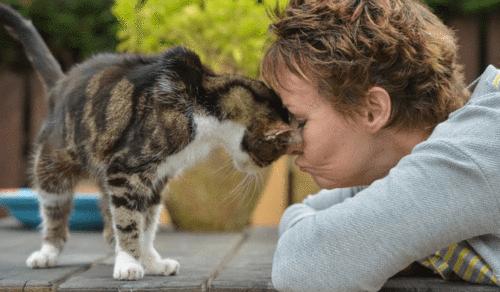 Após 13 anos desaparecida, gata reencontra a sua dona